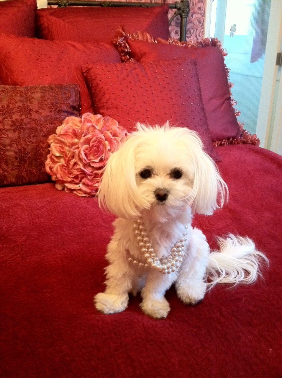 Glamour Shot Cutie Glamour Shots Pets