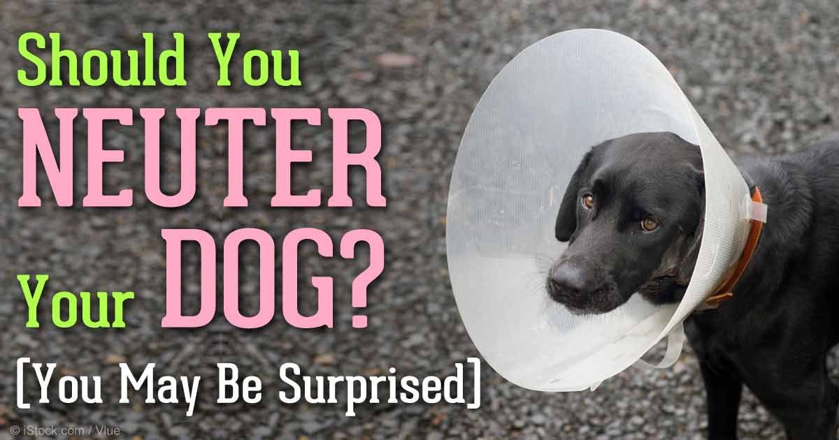 How Much Does It Cost To Get A Dog Spayed http//petsok