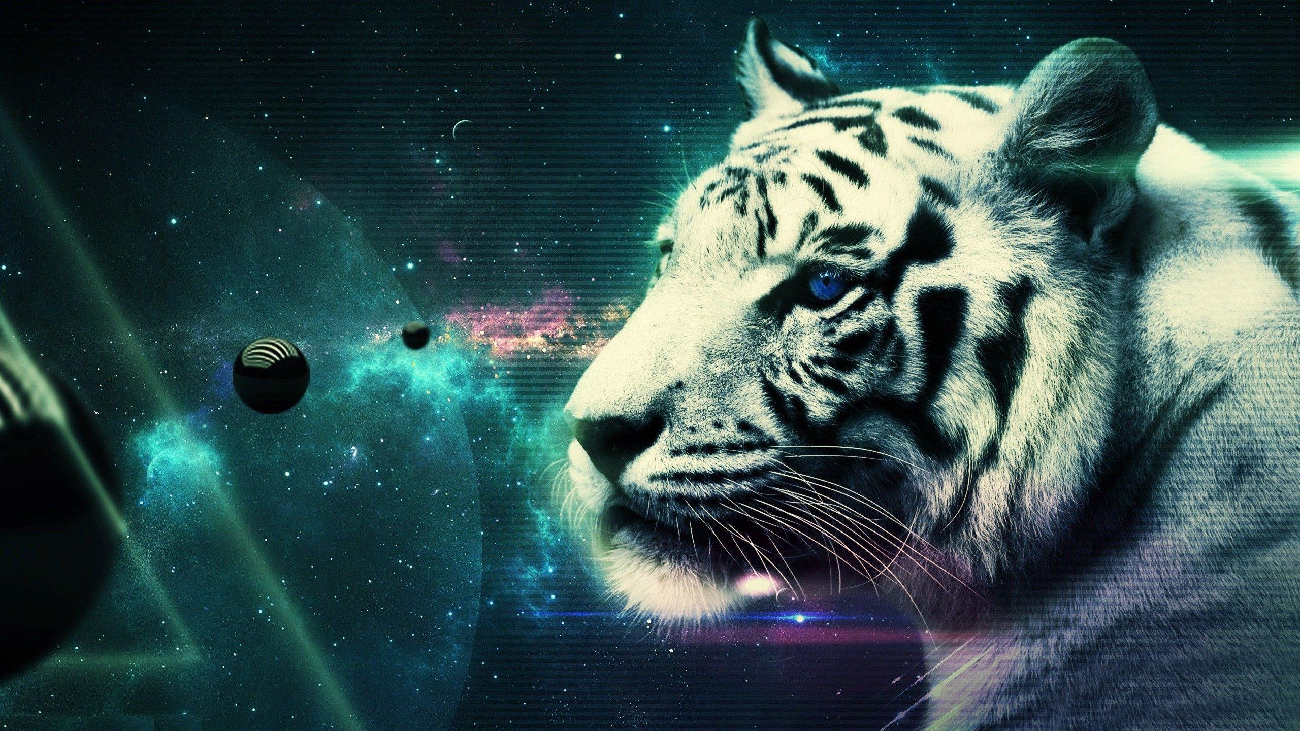 Japan Tigers HD Wallpapers Tiger Wallpaper for Desktop