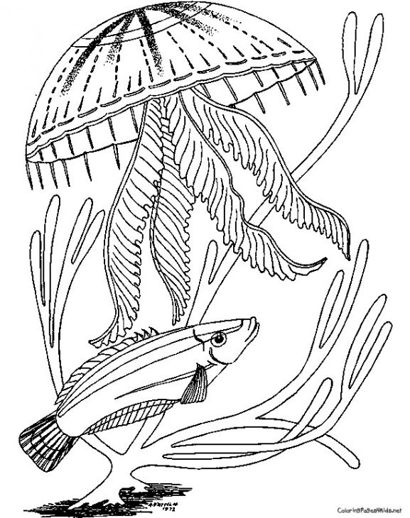Detailed Jellyfish Realistic Coloring Page To Print For Free ...