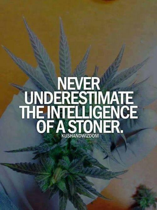 Never underestimate the intelligence of a stoner. #420 #meme #420meme