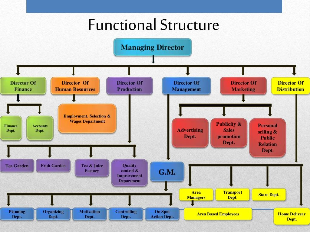 Functional Structure Managing Director Director Of Human