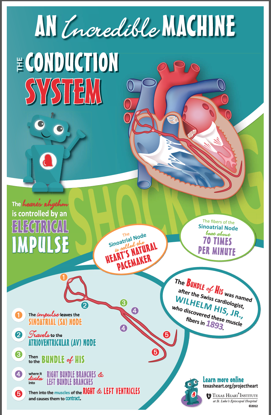 Fun facts for kids about the conduction system, an