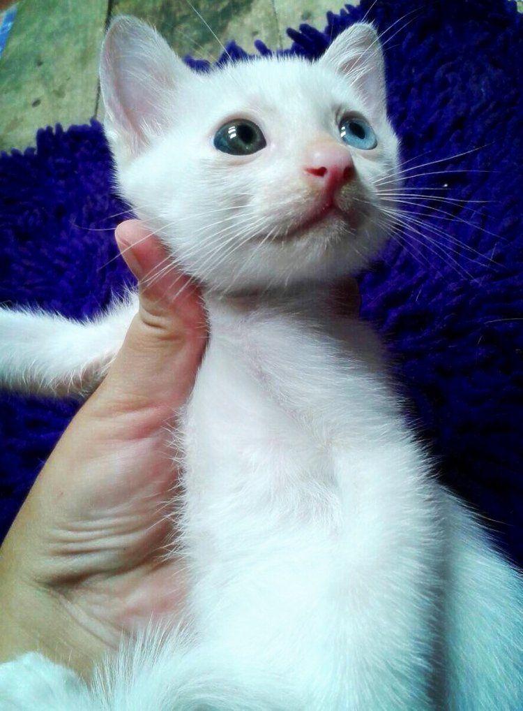 Love Chomp ร ปส ตว น าร ก ล กแมว แมวน อย