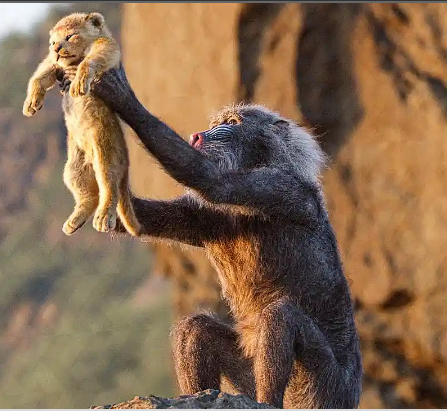 Simba Birth Scene Circle of Life Song THE LION KING