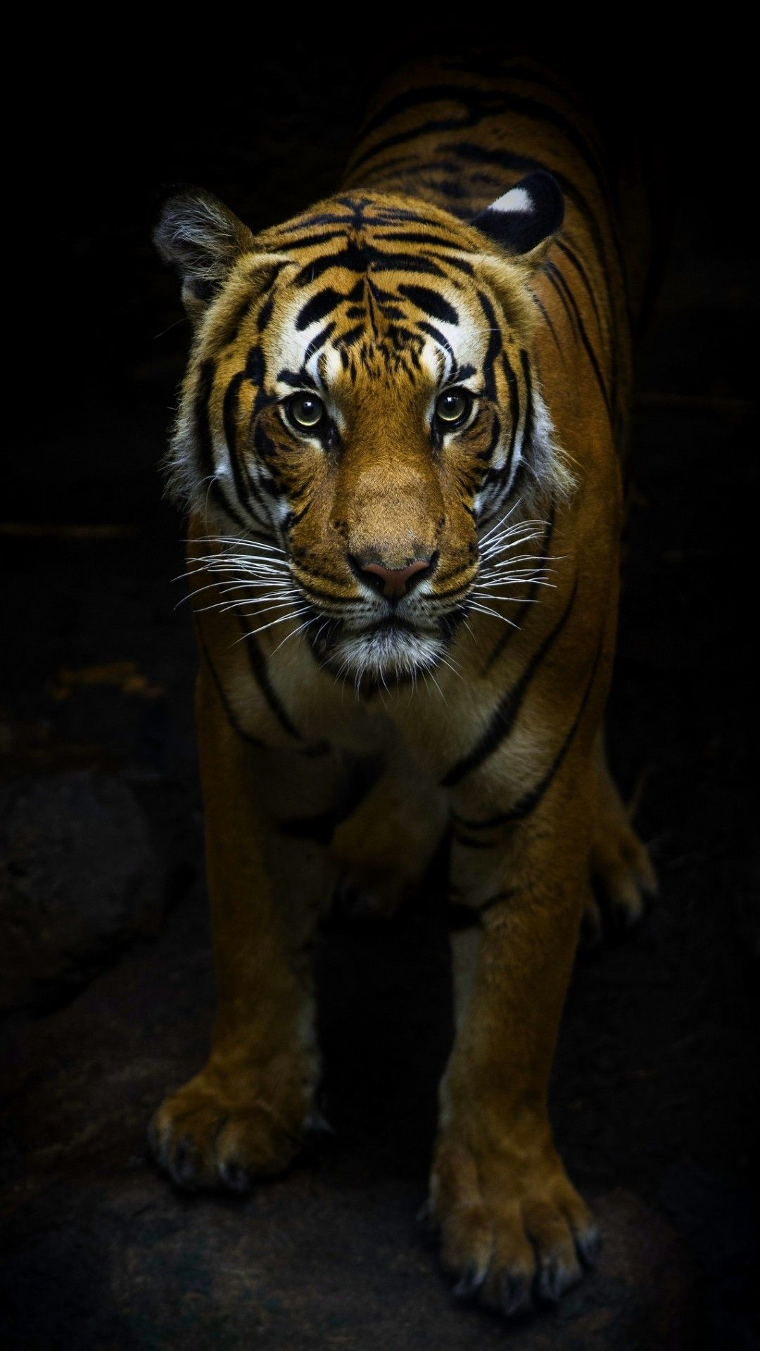 Pin by beredjiklian on nature in 2020 Big cats