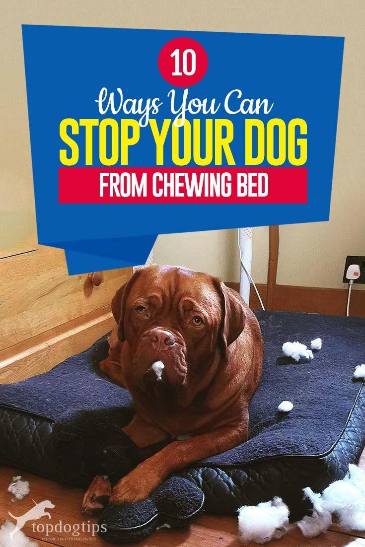 Pin on Top Dog Tips