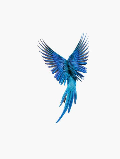 Andrew Zuckerman, Spix's Macaw