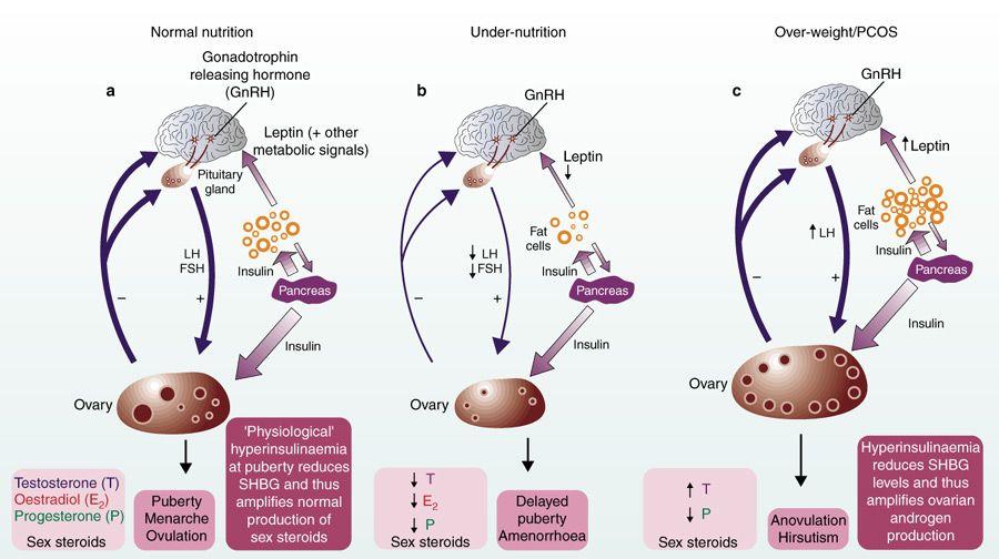 FSH-\u2013-Follicle-Stimulating-Hormone-and-LHjpg (900×504) medicine
