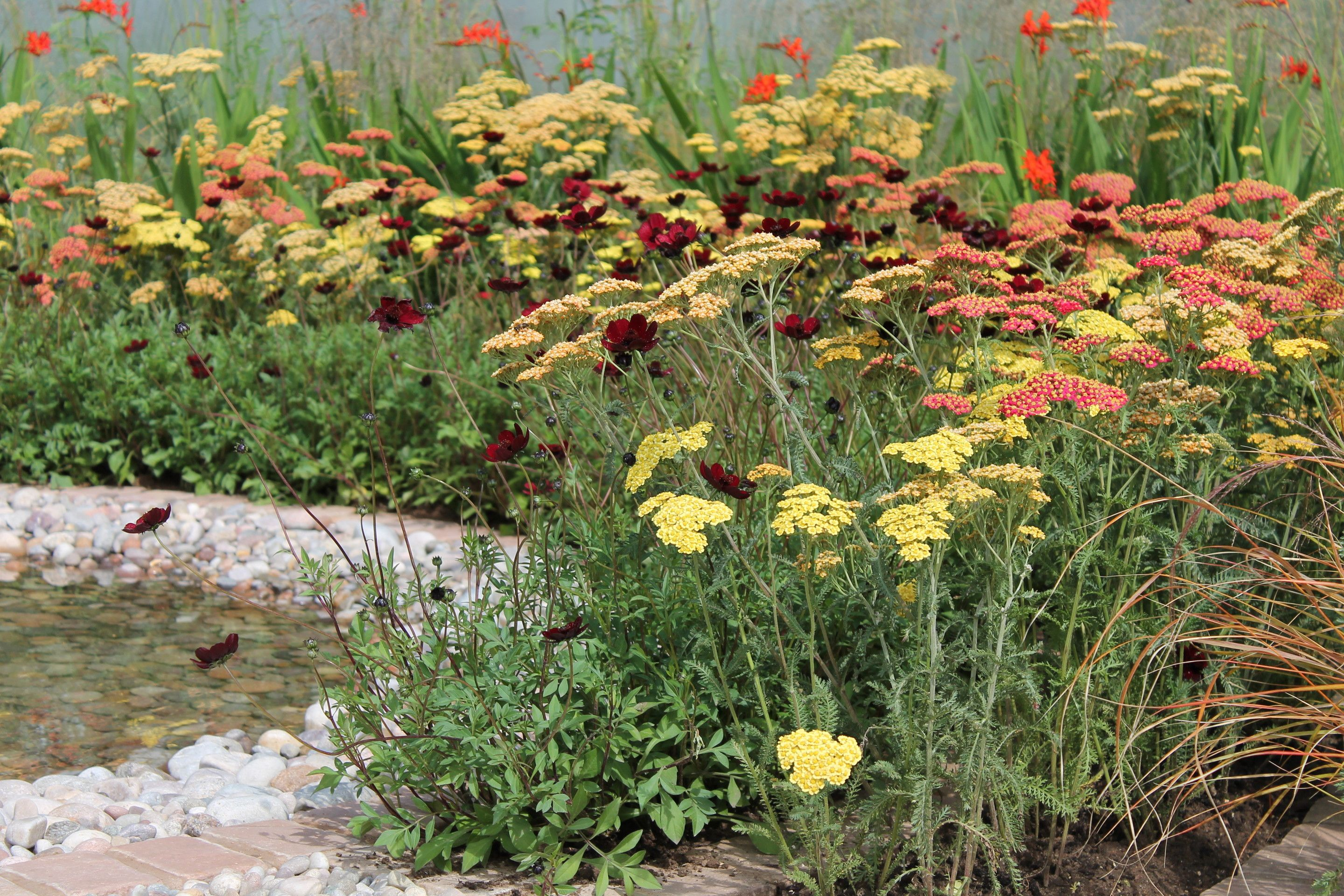Love the planting combination - achilleas cloth of gold ...