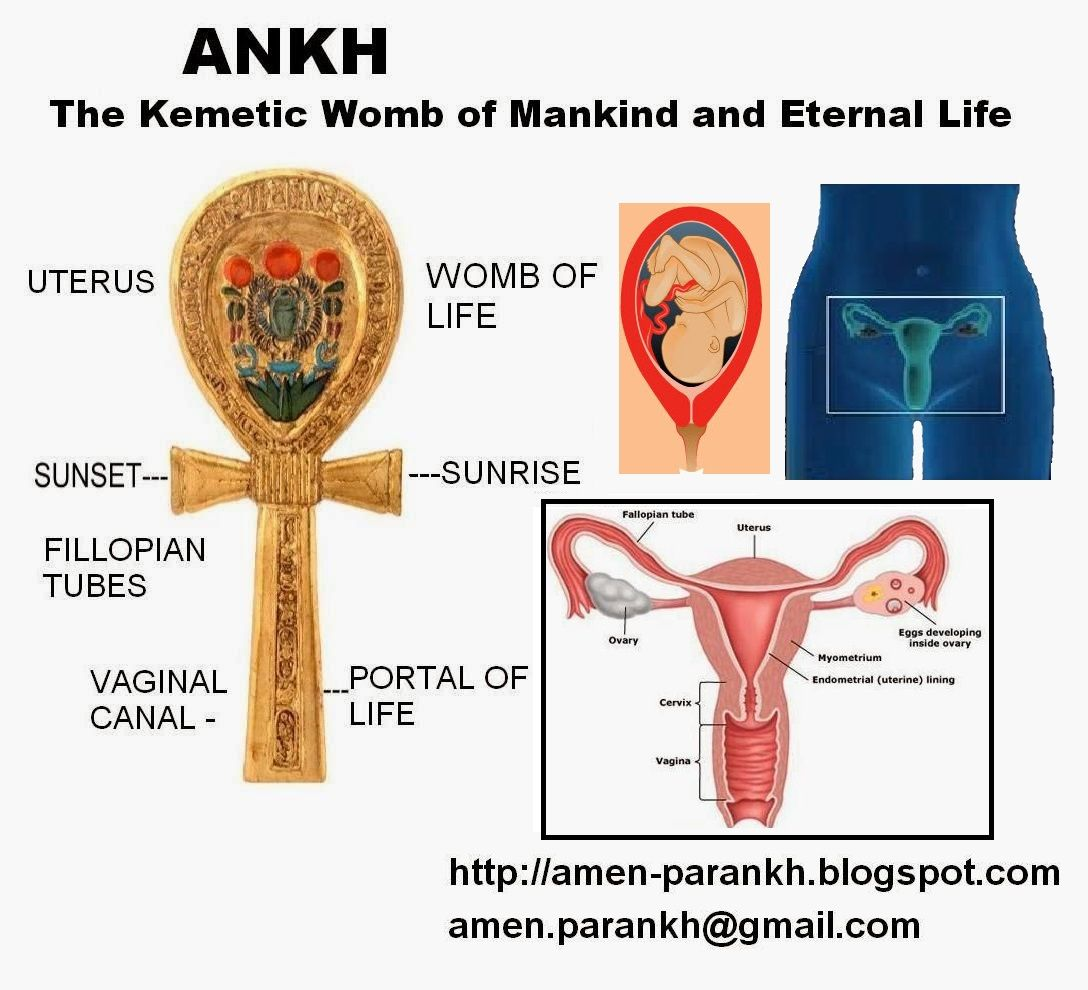 Nutas Ankh Ankh The Kemetic Womb Of Mankind And Symbol Of Eternal