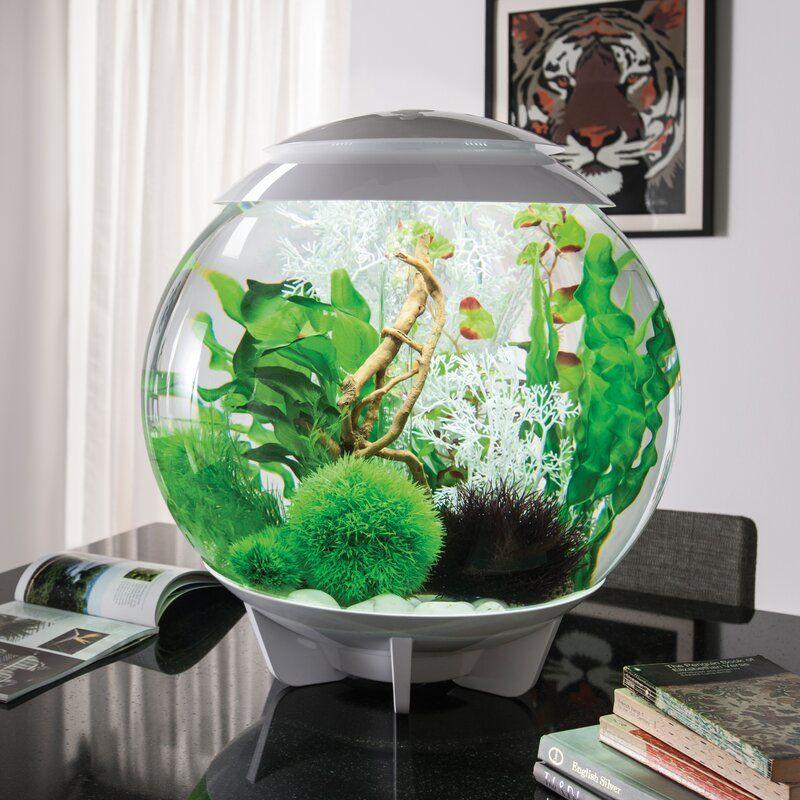 Halo Round Aquarium Tank In 2020 Diy Fish Tank Modern Fish Tank Cool Fish Tanks