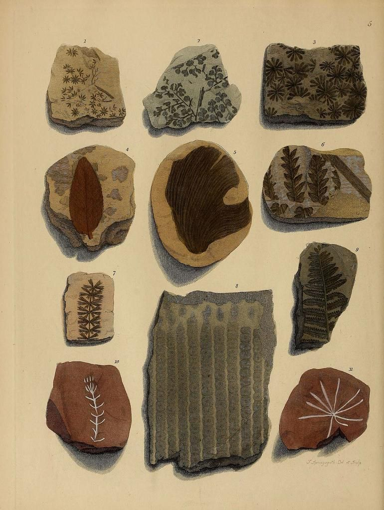 """Fossilized wood, coral, fruit & more in """"A Pictorial Atlas of Fossil Remains"""" http://ow.ly/JxdnQ #fossilfriday"""