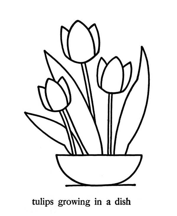 Tulips Growing In The Dish Coloring Page