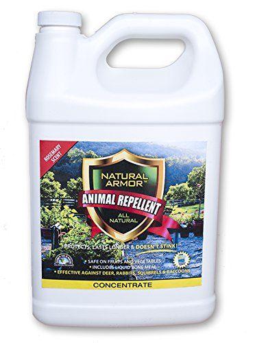 Rabbit Repellent Safe For Dogs : rabbit, repellent, Fence