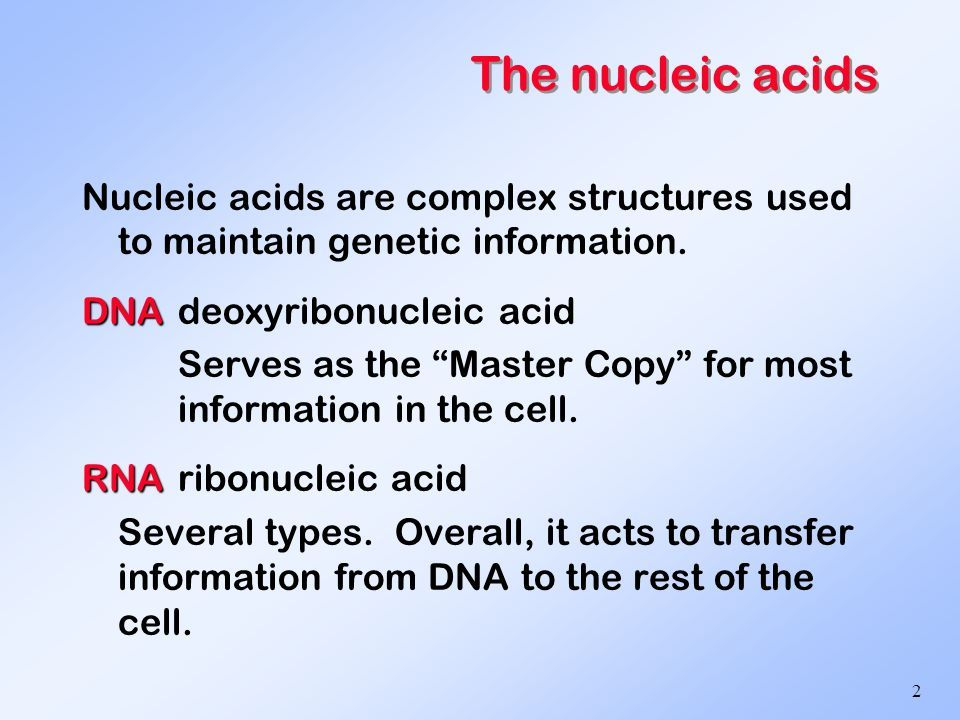 dna and rna structure and function - Yahoo Search Results Yahoo