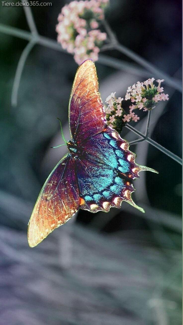 Atemberaubende Bilder von einem erstaunlichen Regenbogentier  #bilder #einem #erstaunlichen #regenbogentier