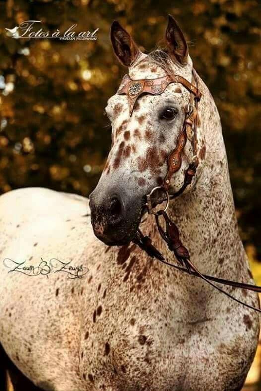 Foto Horses Obsessed