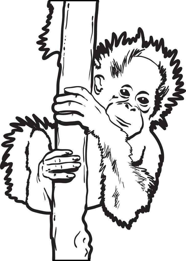 Baby Orangutan Coloring Page Animal Coloring Pages Baby