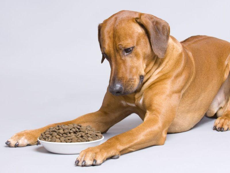 Futterwechsel umstellung auf eine andere marke dog food