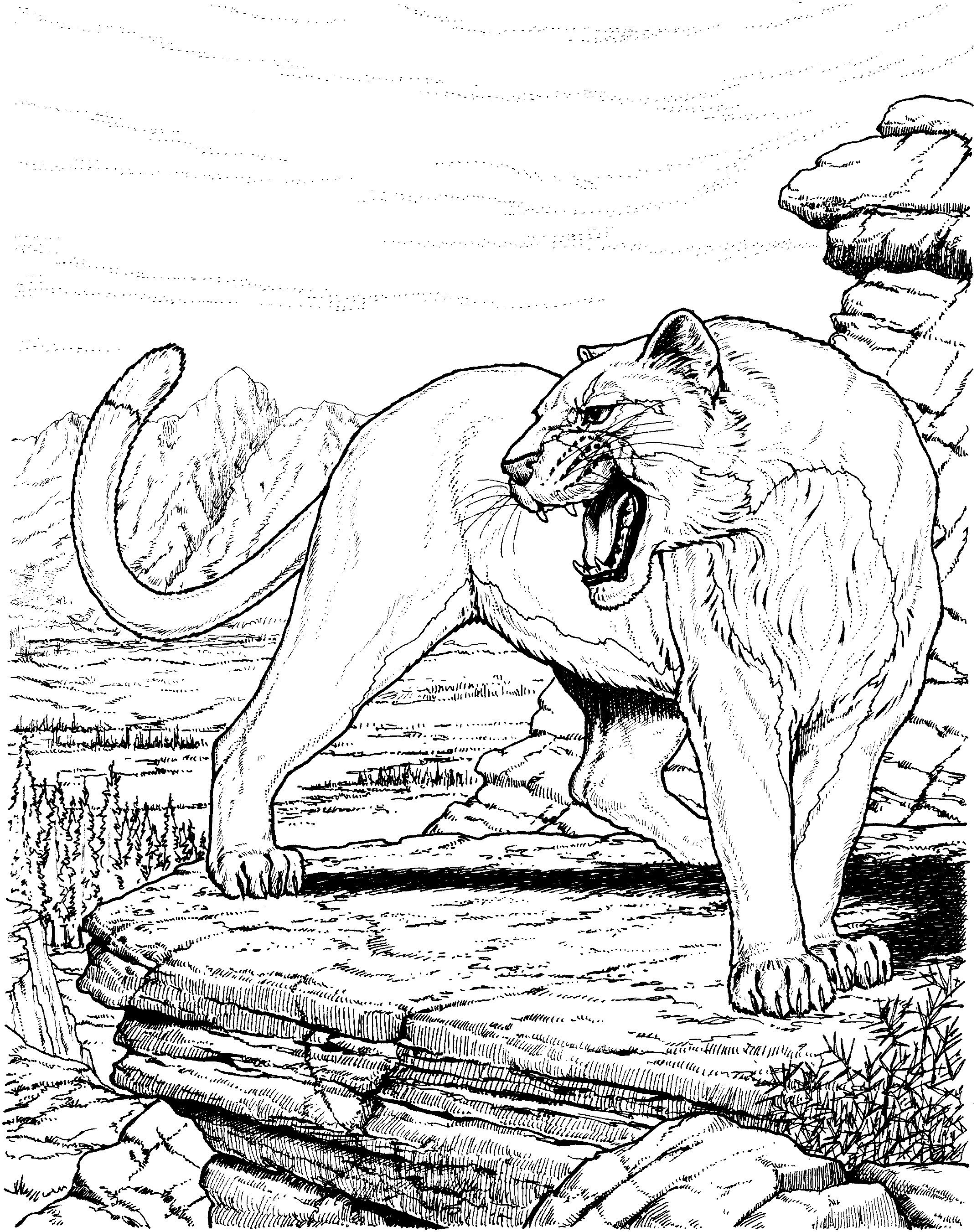 Einzigartig Ausmalbilder Tiere Gepard Animal Coloring Pages Animal Coloring Books Cat Coloring Page