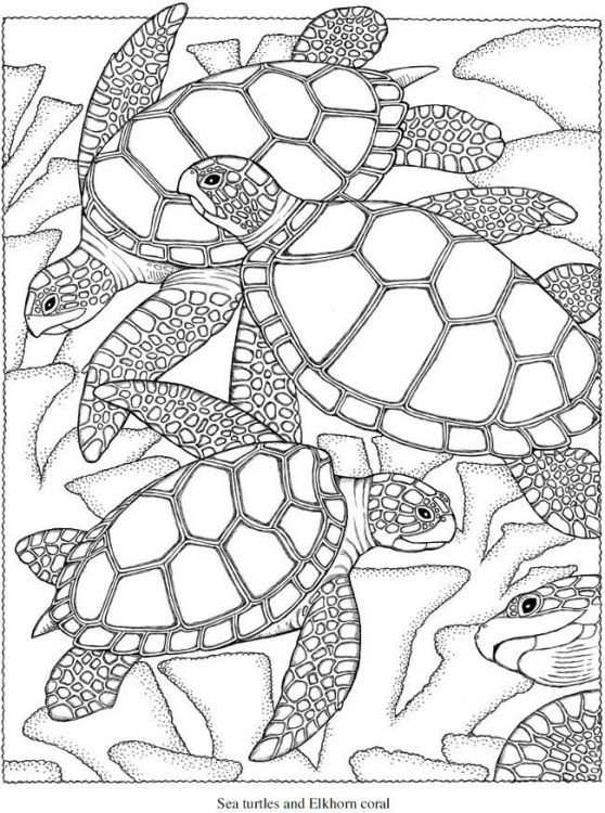 Realistic sea Turtle hard coloring pages for advanced | Animal ...