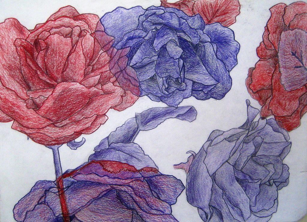 Contour Line Drawing Rose : Contour line drawing rose by squeemishness viantart on