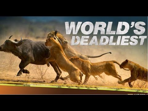 Nature documentary 2016 - World's Deadliest - animal planet HD - Discov.
