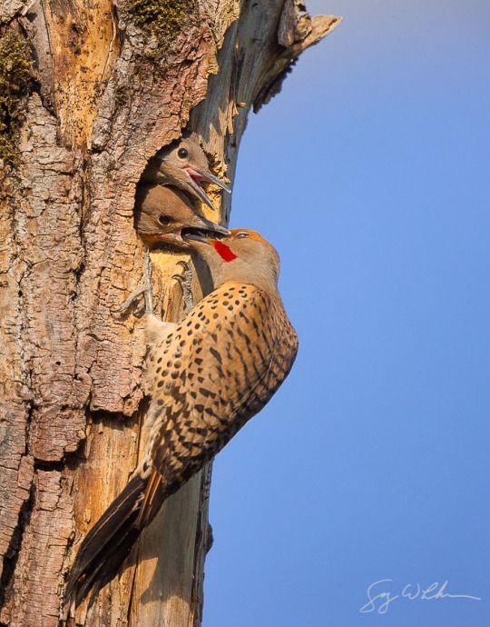 Flicker Nest by gluhm http://ift.tt/16T1FyH