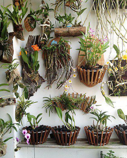 Trade orchid supplies wood baskets garden fleur - Interior plant maintenance contract ...