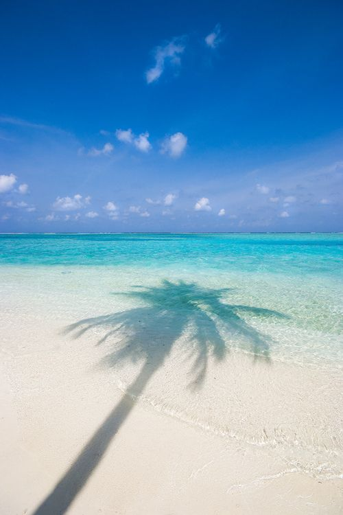 see the shade of the coconut tree and think you are with it calm and quite surrounding :)