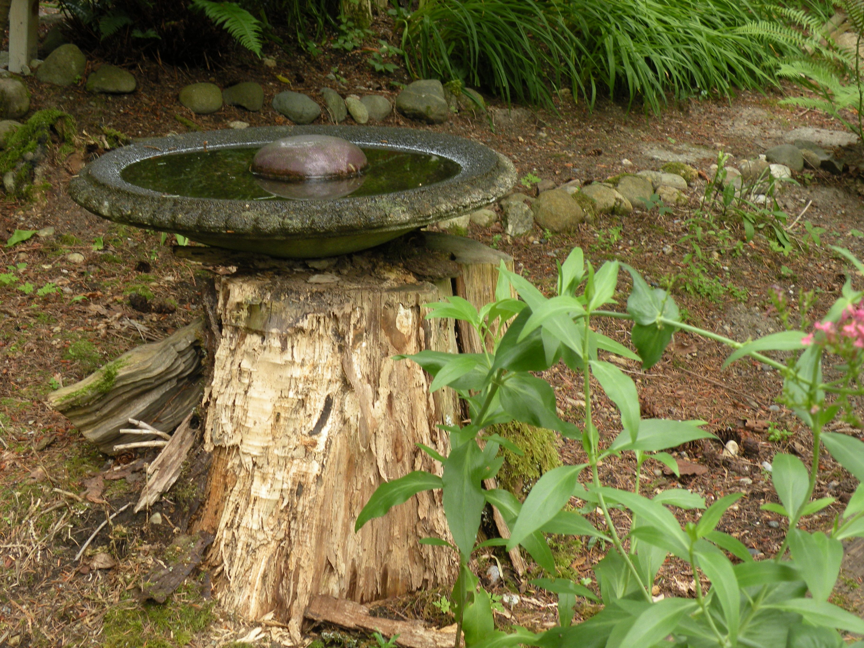water feature on a tree stump search water on Tree Water Feature id=22376