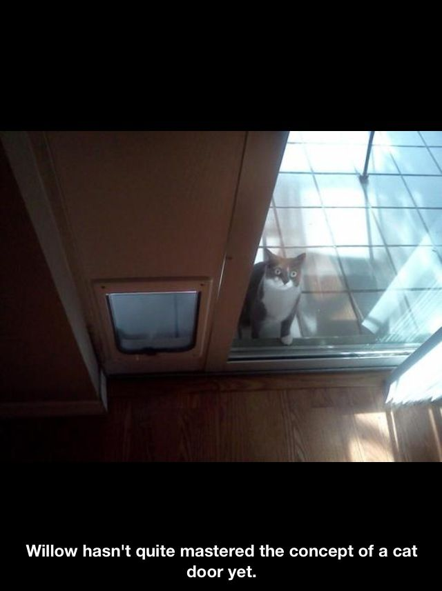 Cat doors are confusing things!