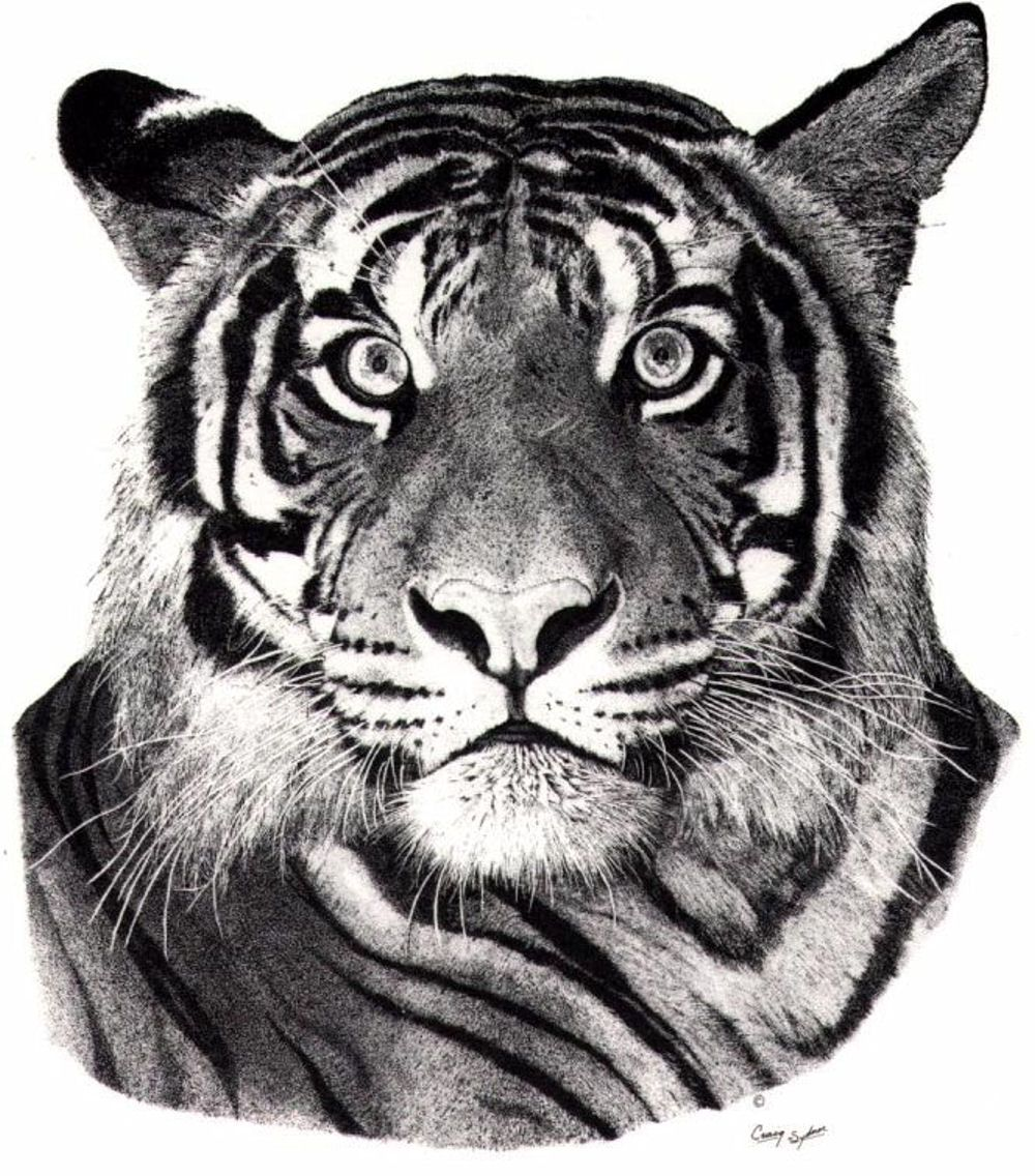 Stipple drawing in pen and ink from my series of wildlife subjects ...
