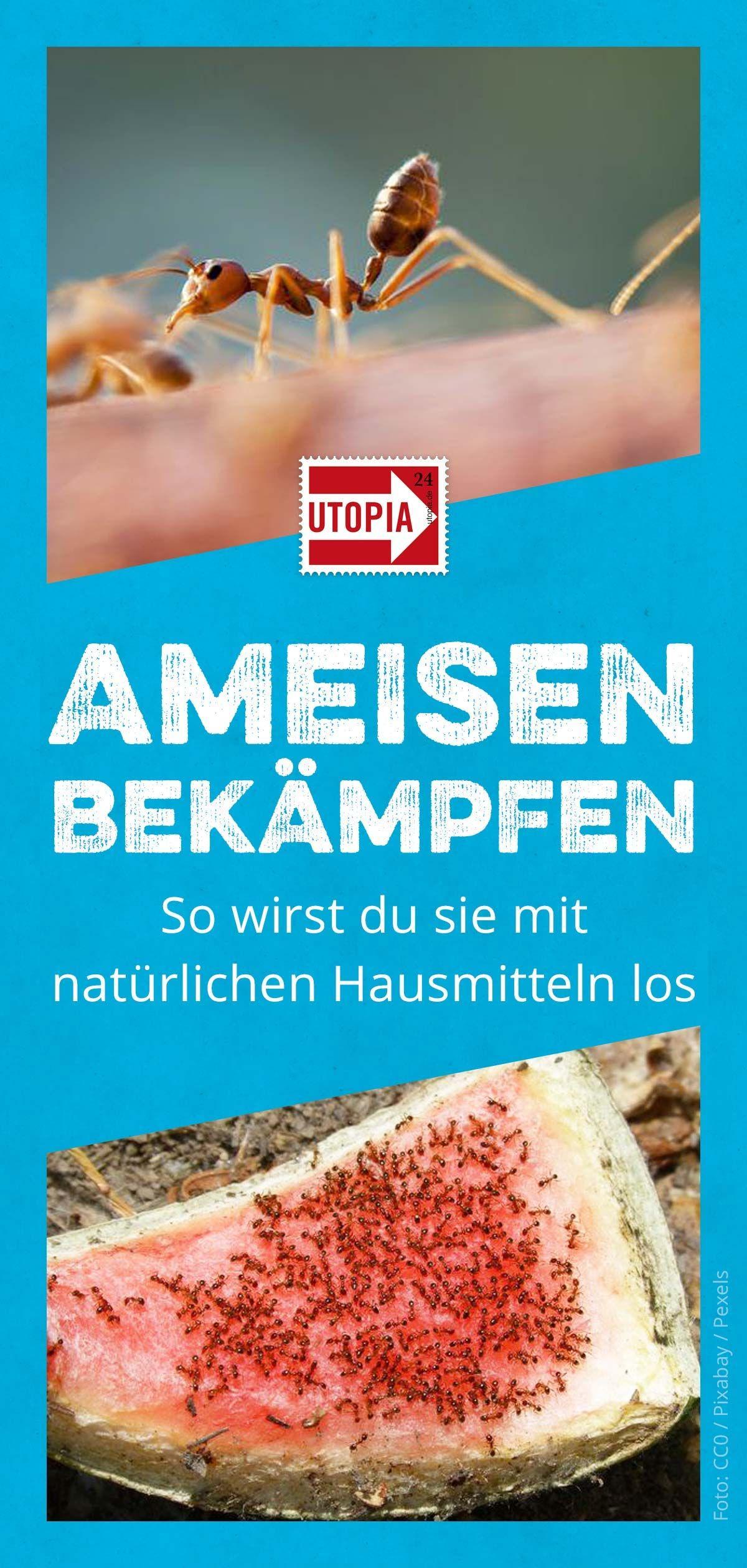 Ameisen Bekampfen Naturliche Hausmittel Fur Garten Und Wohnung Utopia De Ameisen Bekampfen Ameisen Naturliche Hausmittel