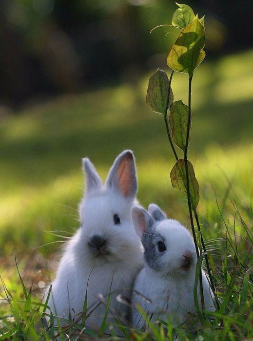 Art Bunnys lovelythang
