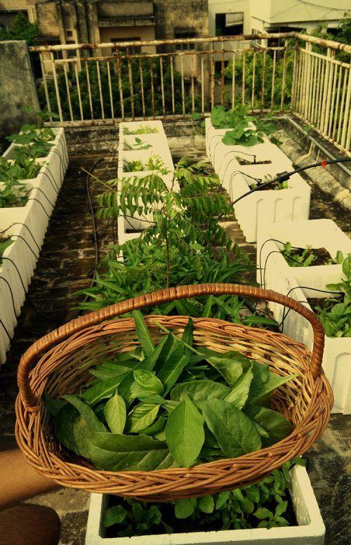 These IIT Kharagpur Alumni Show How You Can Grow Organic ...