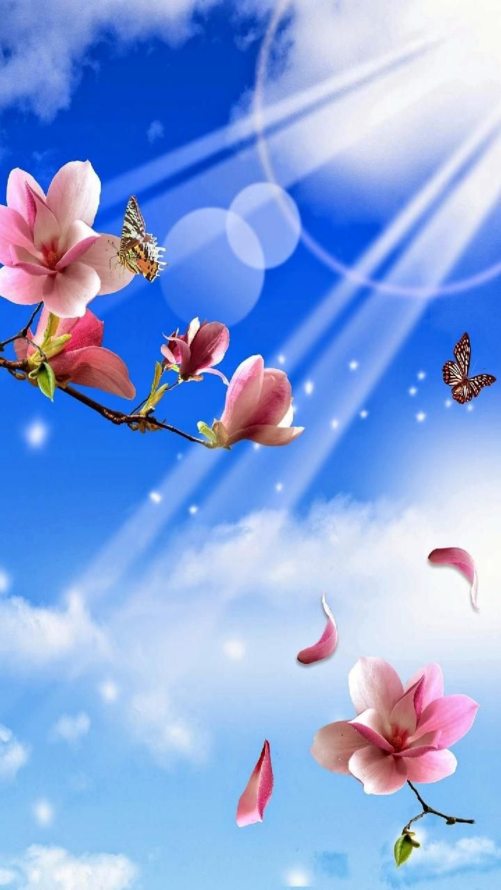 Download hd background wallpaper by immehta e free on zedge