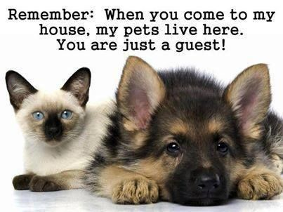 You are just a guest funny quotes cute animals cat dog   ME