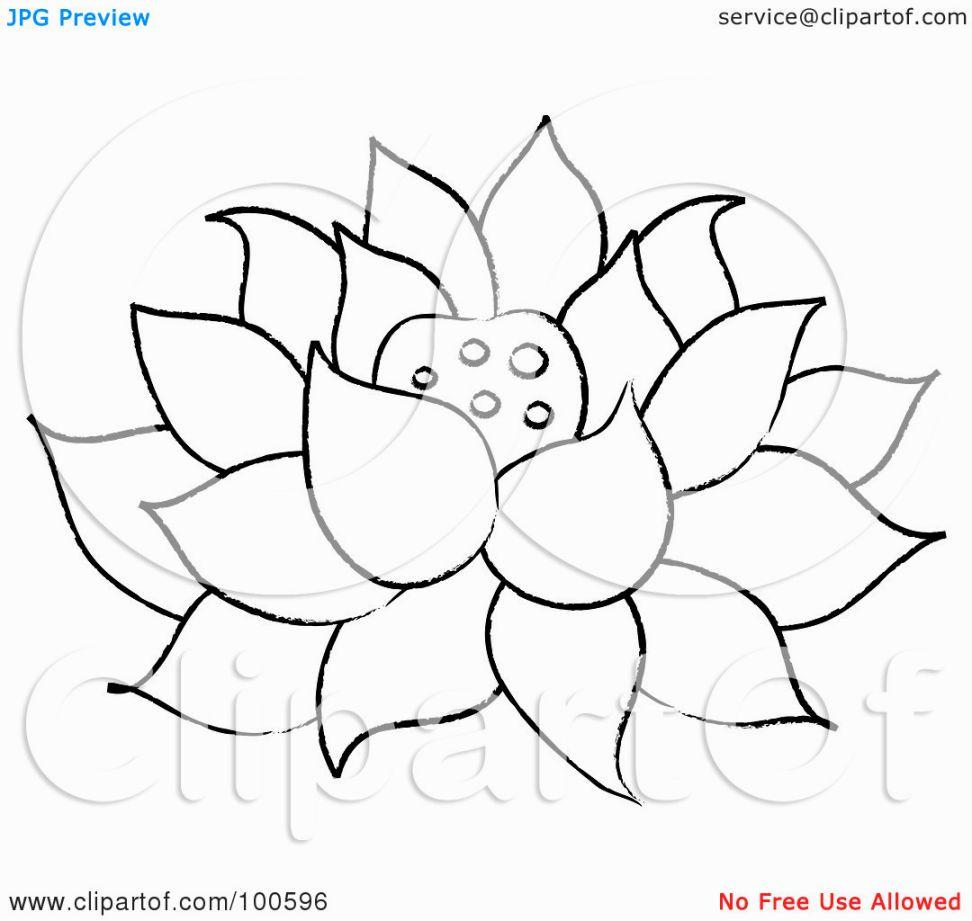 Printable Lotus Coloring Pages Lotus Flower Colors Flower Drawing Flower Coloring Pages