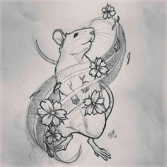 Line Drawing Rat : Pin by chrystel bella on tattoos pinterest tattoo