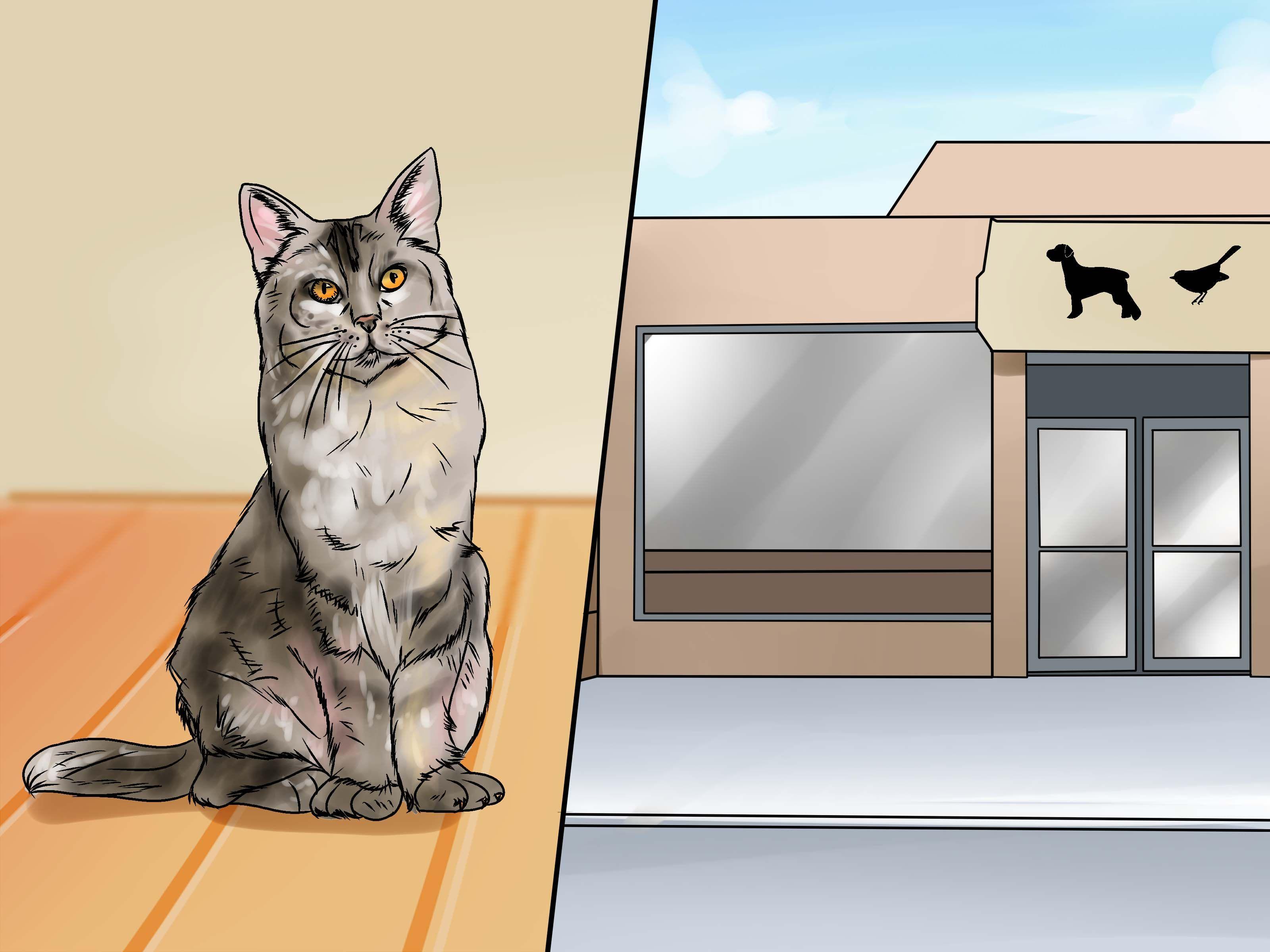 se d barrasser de l 39 odeur de l 39 urine de chat urine de chat nettoyage en profondeur et odeur. Black Bedroom Furniture Sets. Home Design Ideas