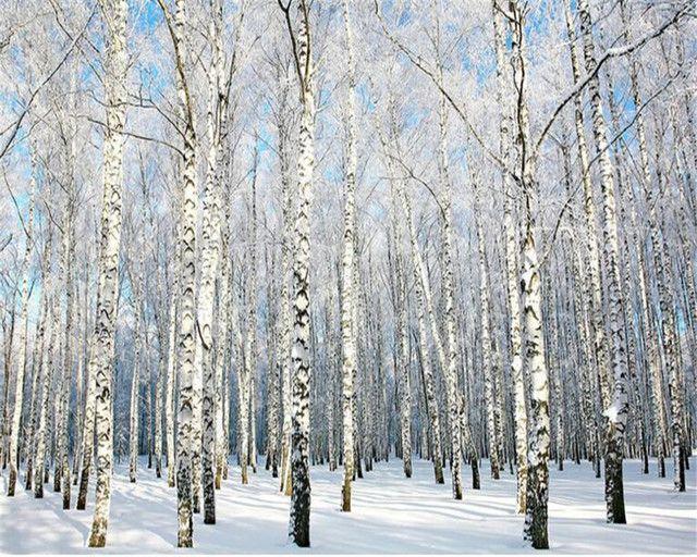 Картинки по запросу зимний березовый лес (с изображениями ...