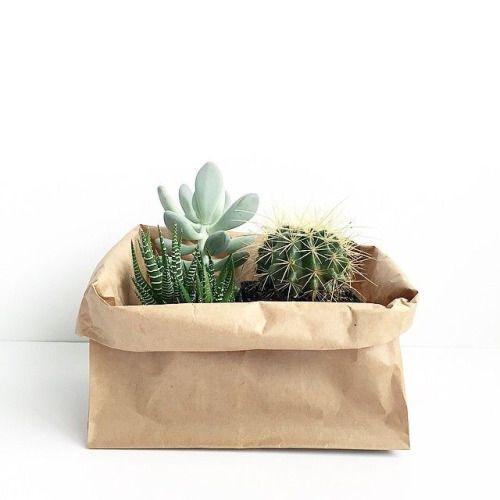 classy pictures of cactus house plants. The Classy Issue  Succulent PlantsCactiHouse DIY Pinterest Interiors