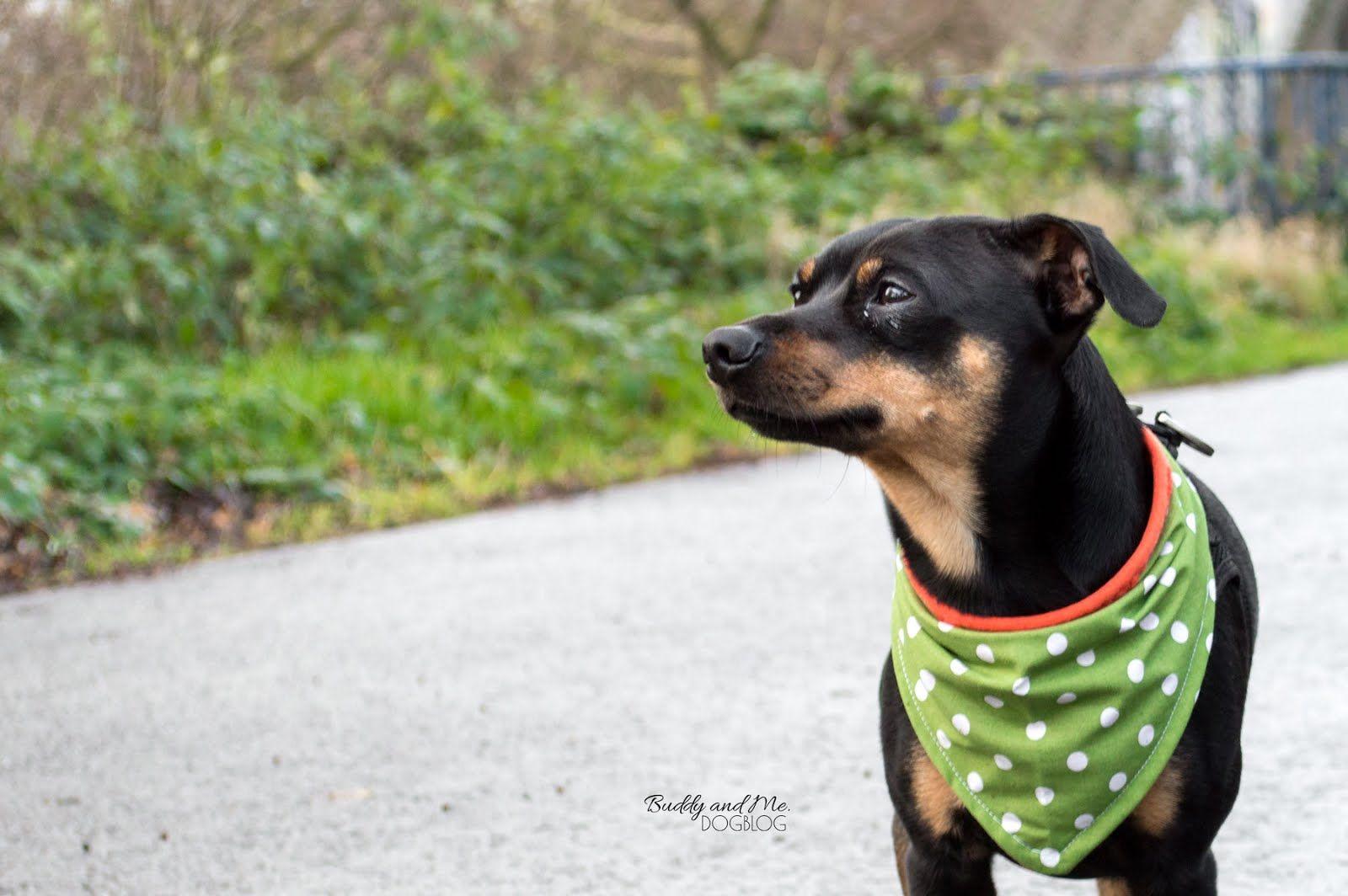 DIY Hundehalstuch für den Winter | dog DIY | Pinterest ...