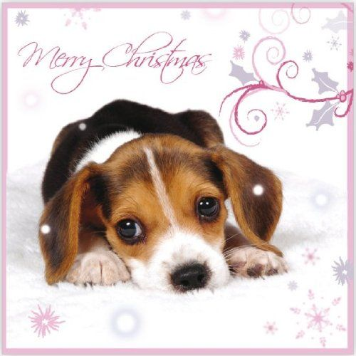 Snowflakes Falling Beagle Puppy Dog Pack Of 10 Small Charity Www Amazon Co Uk Beagles Cute Funny Beautiful Beagle Puppy Dogs Puppies Dogs