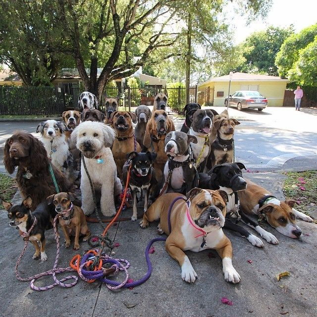 How adorable is this?!... The Happiest Pack Of Dogs In ...