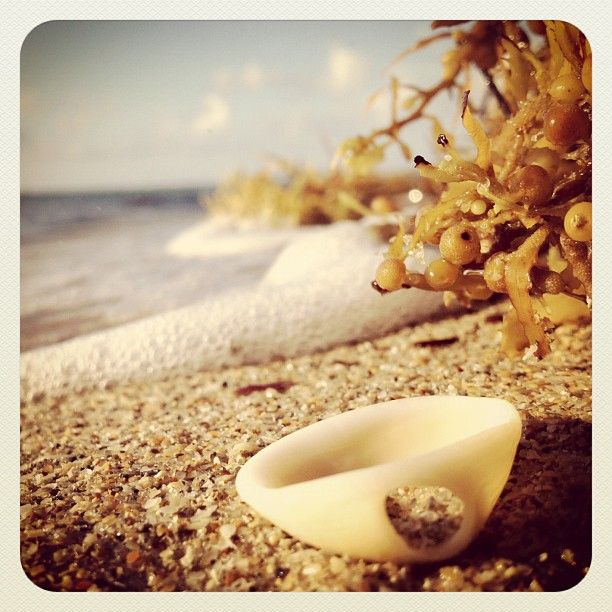 Seashell and seaweed.