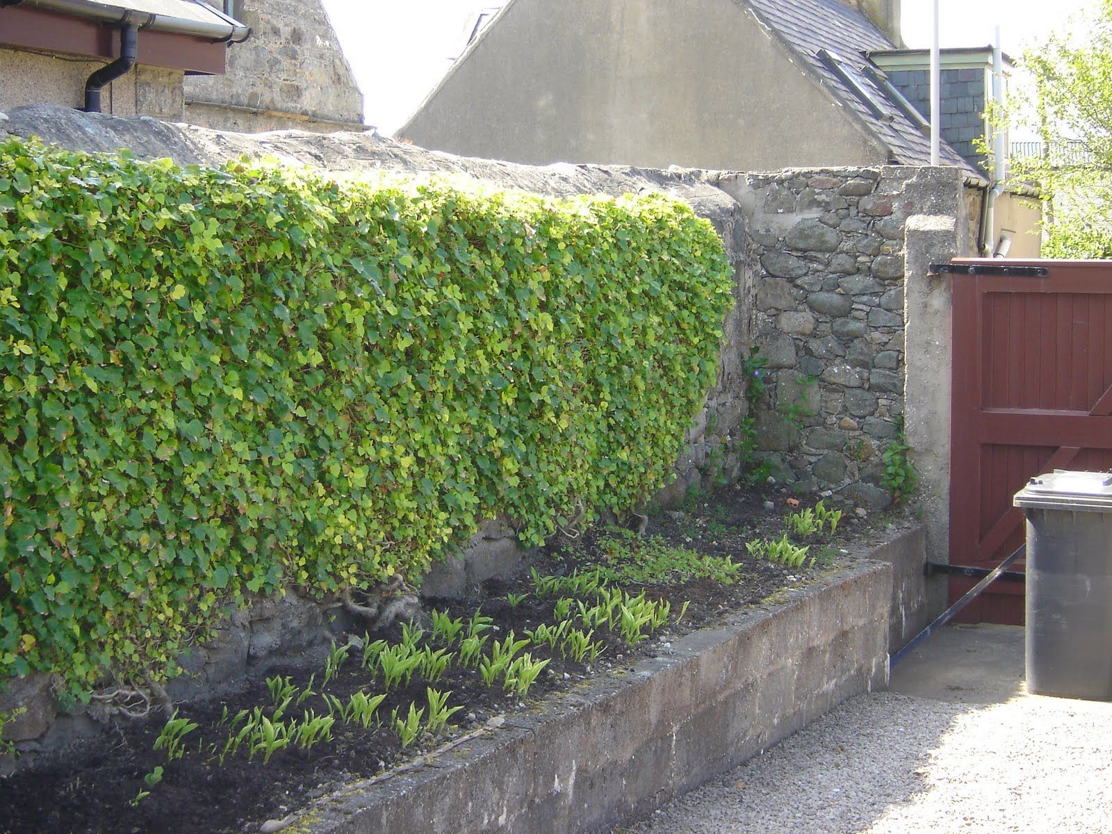 Love Ivy Walls Probably Don T Need All Of This Though Concrete Retaining Walls Outdoor Gardens Outdoor Areas