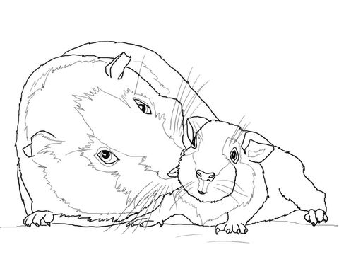 guinea pig mother and baby coloring page from guinea pig category select from 23564 printable. Black Bedroom Furniture Sets. Home Design Ideas